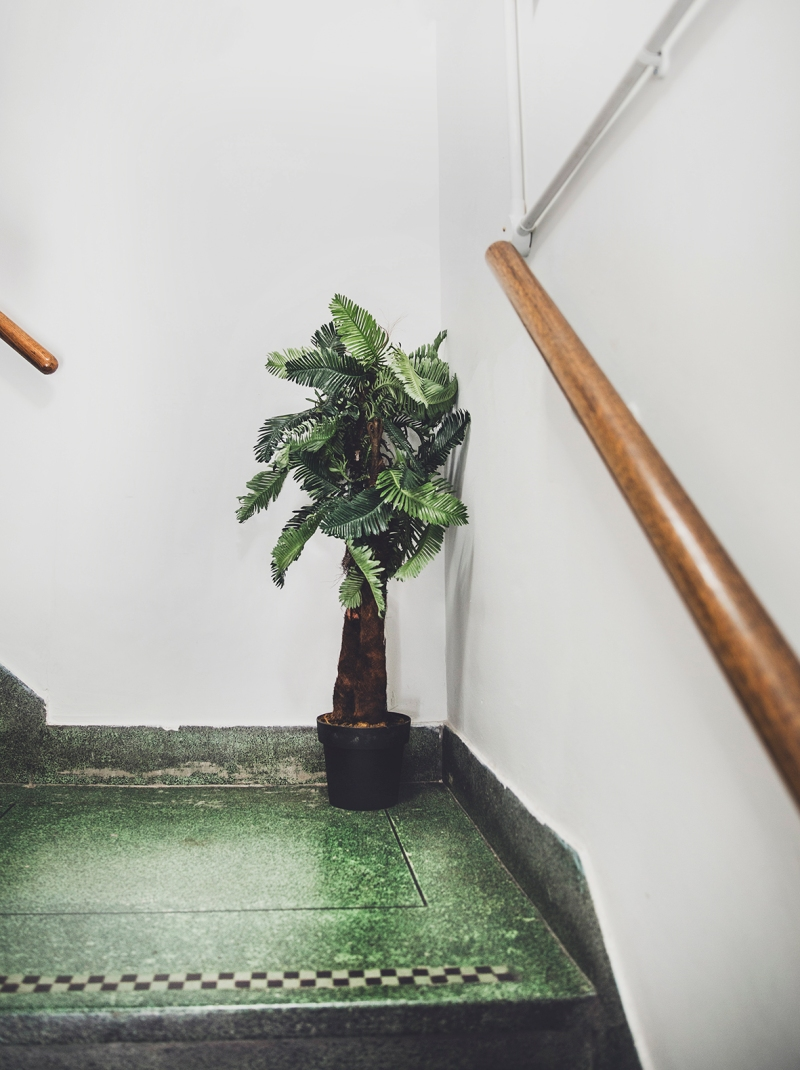 Humber Street Gallery WORM FESTIVAL stairs to Gallery Two and Three with a plant on staircase
