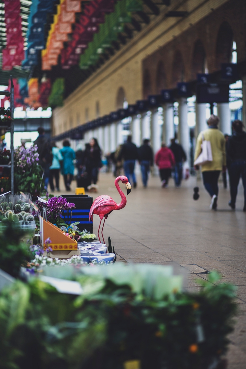 HULL PARAGON INTERCHANGE FLAMINGO
